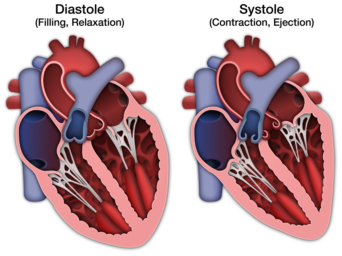 http://www.artandsciencegraphics.com/wp-content/uploads/Normal-Heart-2-Views.jpg